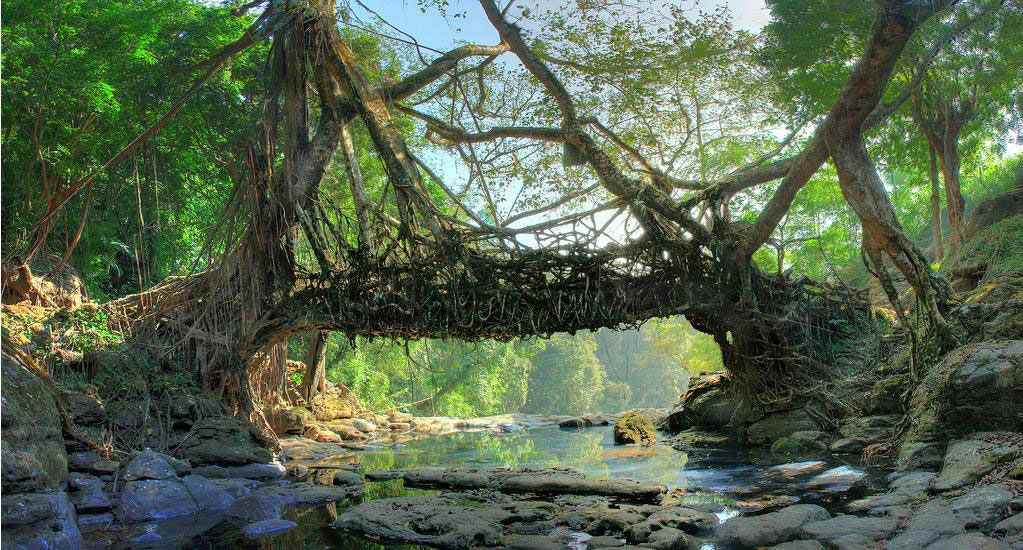 """""""Живой мост"""" Индия, г. Черапанджу."""